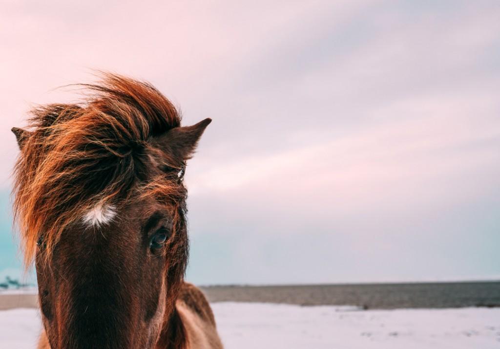 paard-klein